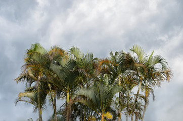 Bunch of palm trees and cloudy sky
