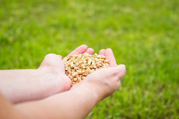 Wood pellets on green grass background in woman hands. Biofuels. Cat litter.