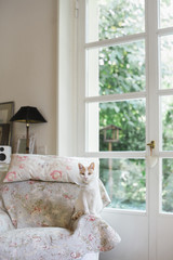 Cat with elizabethan collar on in sunny living room looks at the camera