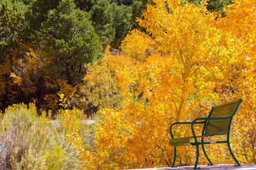 Park bench surrounded by incredible vibrant autumn leaves in Dixie National Forest at the entrance of Cedar Breaks National Monument.
