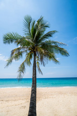 Palm tree on the beautiful tropical sandy beach over blue sea and sky background