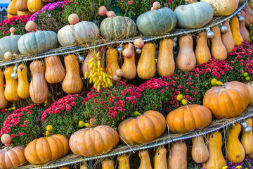 A composition of pumpkins lined up in rows, next to bouquets of real flowers. Colorful autumn in Moscow city, Russia.