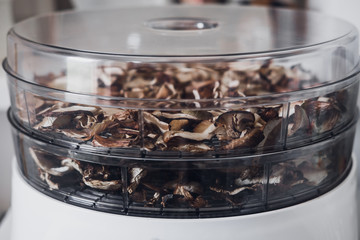 Digital food dehydrator drying mushrooms