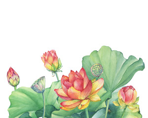 Greeting card with pink lotus flower with leaves, seed head, bud (water lily, Indian lotus, sacred lotus, Egyptian lotus). Watercolor hand drawn painting illustration isolated on white background.