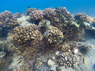 Coral reef formation. Exotic island shore shallow water. Tropical seashore landscape underwater photo.
