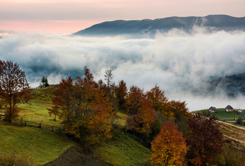 orchard with red foliage in foggy mountains. gorgeous rural autumn scenery at dawn