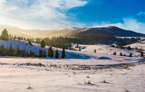spruce forest on snowy hills. gorgeous winter landscape in mountains