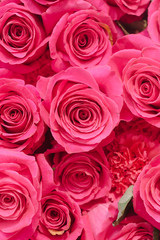 background of vivid pink roses