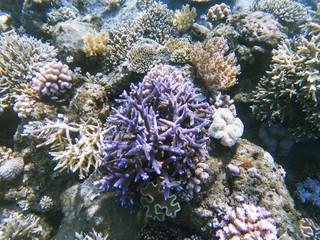 Tropical seashore landscape underwater photo. Coral reef animal.