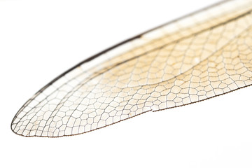 Flügel einer Libelle