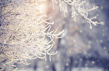 Branches in hoarfrost and snow in the winter