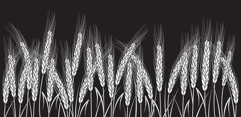 White wheat field isolated on black background. Set of wheat ears. Background for farms and bakeries. Collection of elements for company logos, print products, page and web decor or other design.