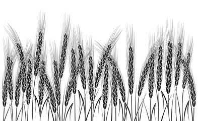 Black wheat field isolated on white background. Set of wheat ears. Background for farms and bakeries. Collection of elements for company logos, print products, page and web decor or other design.
