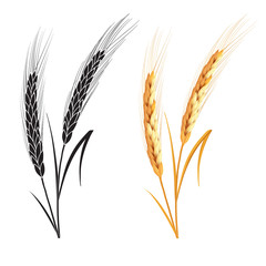 Black and gold wheat ears isolated on white background. Set of wheat ears. Background for farms and bakeries. Collection of elements for company logos, print products, web decor or other design.