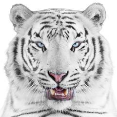 Fototapete - White tiger portrait