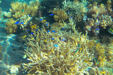 Tropical fish colony in coral. Tropical seashore animal underwater photo.