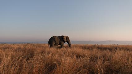Bull Elephant Nambiti Game Reserve, South Africa.