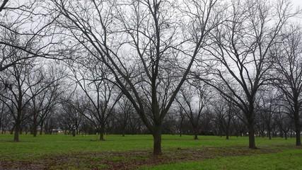 Pecan Orchard, Georgia