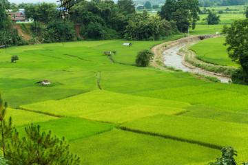 Green rice field in Pua, Nan province, North Thailand