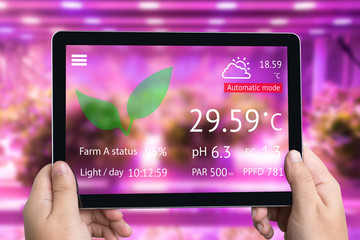Smart agriculture futuristic indoor farming and Photoperiodism concept. Hand using tablet to monitoring artificial LED panel light source used in an experiment on vegetables  vertical plant growth.