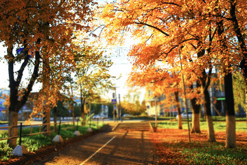 Sunny weather in autumn park