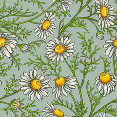 chamomile vector pattern