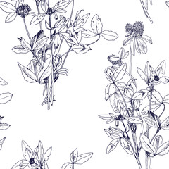 Seamless pattern with drawing herbs and flowers