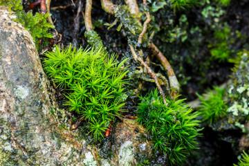 Moss on tree close up