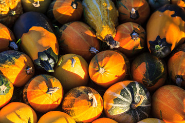 background of decorative pumpkins