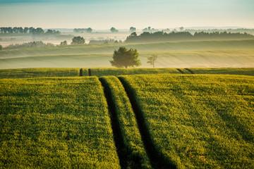 Acrylic Prints Village Stunning sunrise at foggy field in summer