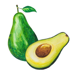 Avocado fruits painting.Painted with watercolor.