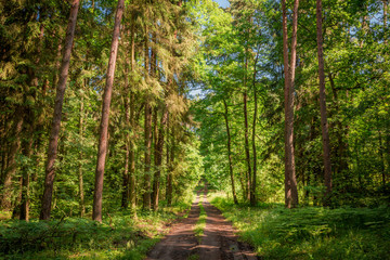 Beautiful summer in the forest in Poland