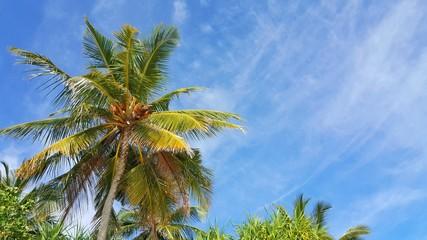 P00759 Maldives white sandy beach coconut palm trees on sunny tropical paradise island with aqua blue sky sea ocean 4k