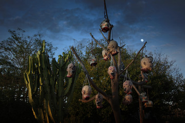 severed heads hang on the tree