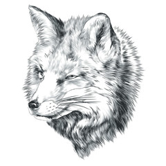 Fox sketch vector graphics head monochrome black-and-white drawing