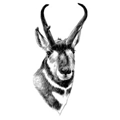 pronghorn head sketch vector graphics black and white monochrome pattern