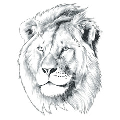 sketch of lion head vector graphics monochrome black-and-white drawing