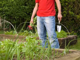 Man in garden planting