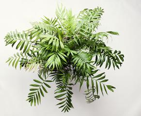 Büro Pflanze von oben auf weiß