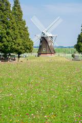 コスモス畑と風車