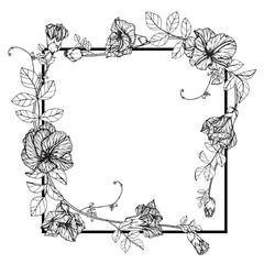 Butterfly pea flower frame drawing.
