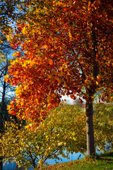 Romantic fall scene of a tree by the river