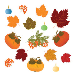 Set - pumpkin, bunch of ashberry, autumn leaves, burning candle - isolated on white background - art creative vector