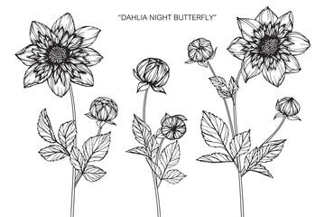 Dahlia flower drawing.