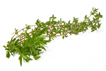 Rosemary,Thyme, fresh herbs isolated on white background