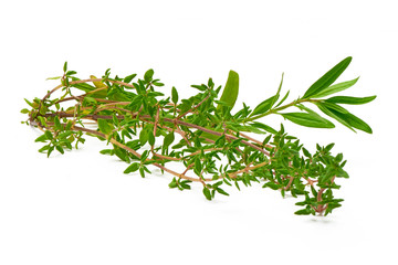 Rosemary, Thyme, fresh herbs isolated on white background
