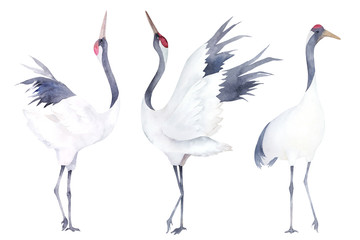 Watercolor set of cranes. Hand drawn illustration