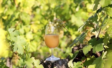 fresh grape must in wine glass
