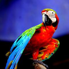 Fond de hotte en verre imprimé Perroquets Beautiful parrot