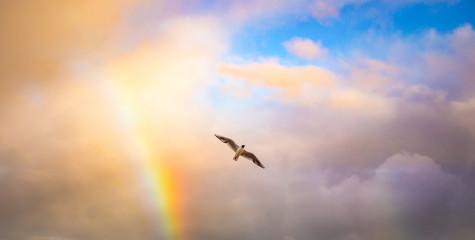 Vogel in den Wolken mit Regenbogen